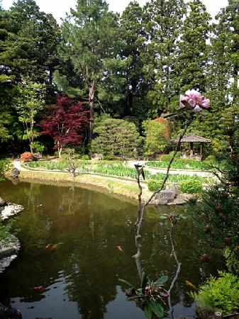 Rinnoji Temple: a flower and the lake