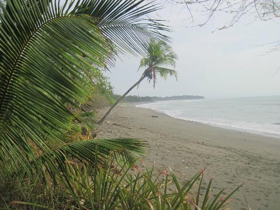 Blue Osa Yoga Retreat and Spa: beautiful beach