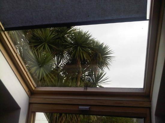 An Capall Dubh: palms outside skylight