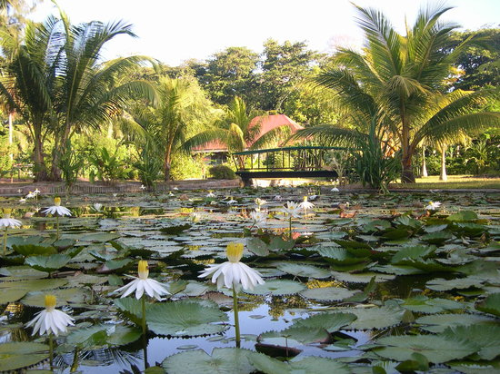 La Diguoise Guesthouse: Waterpond