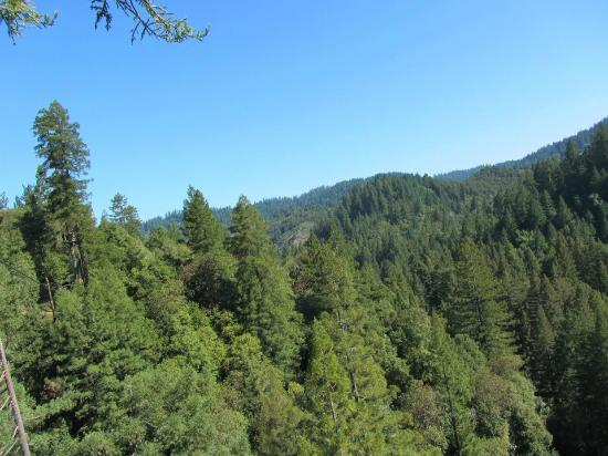 Sonoma Canopy Tours: What A Beautiful View!
