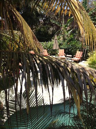 Todos Santos Inn : Gardens!