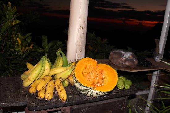 Mount Edge Guest House: Fresh EITS @ Mount Edge, Newcastle, Jamaica