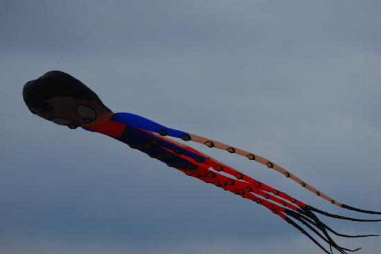 Trinity River: Kites