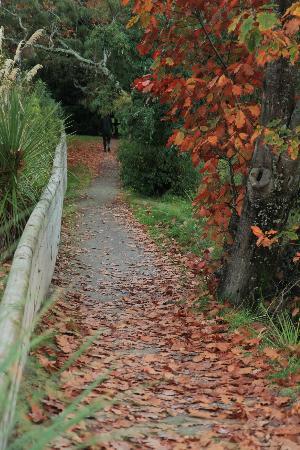 Footpath along Tongariro River near Turangi