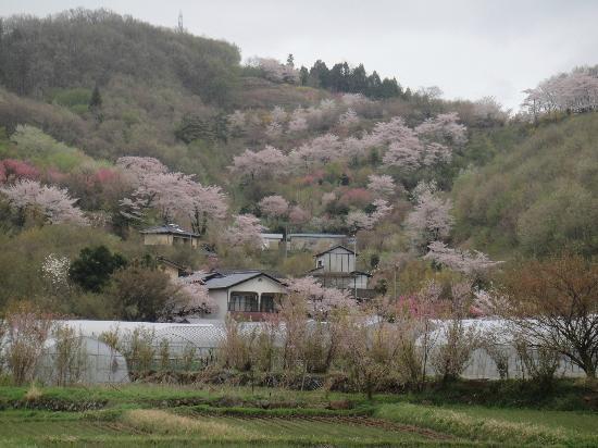 Hanamiyama Park: 全景