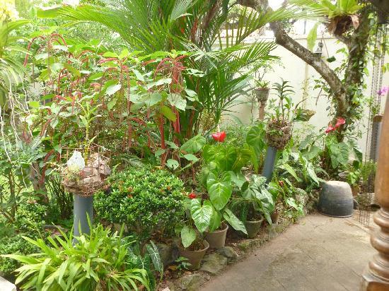 River View Inn : Garden path