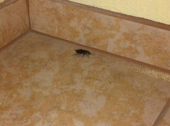Red Roof Inn Port Aransas: roaches
