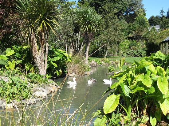 Katikati Bird Gardens: Tranquil lake scene