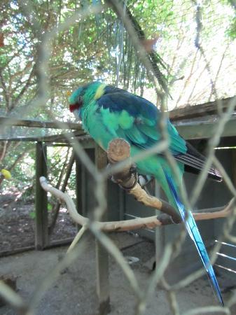 Katikati Bird Gardens: Beautiful coloured bird
