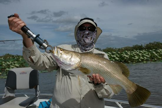 River and Reef Fishing Charters: Barra caught as a bye catch while fishing for Saratoga on Corroborree Billabong