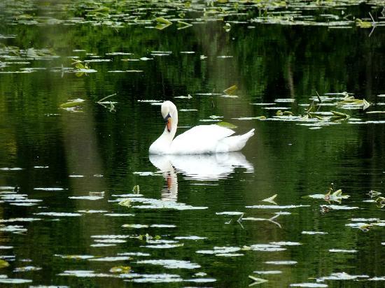 Tullow, Ireland: Lake