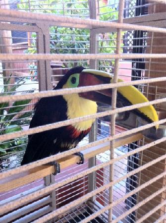 Tamara : 'Leo' - he's a happy bird, as far as caged birds go...