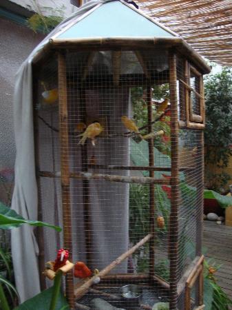 Casa Moro: Beuatiful carnaries