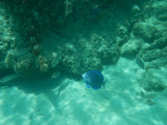 Anguilla: Colorful fish
