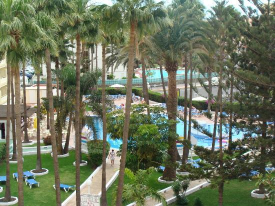Playa del Sol -  Adults Only : Piscine et verdure