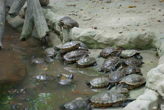 Thats a lot of turtles picture of manila zoo manila tripadvisor manila zoo thats a lot of turtles publicscrutiny Choice Image