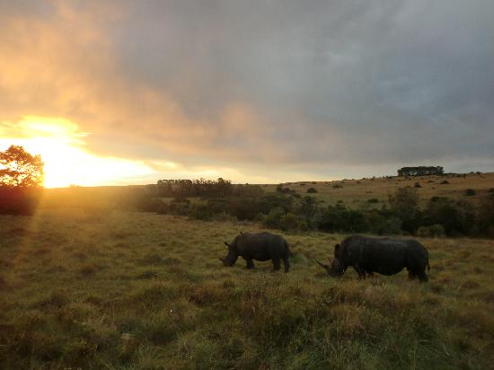 Kichaka Luxury Game Lodge: Rhinos at sunset