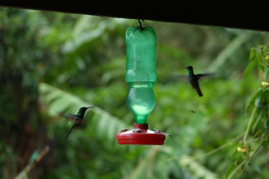 Belcruz B&B: One of the feeders hanging from the covered back porch