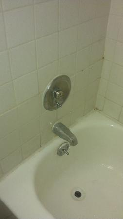 Fiesta Inn & Suites: Broken Shower, Roaches in the room and overall very disgusting hotel..