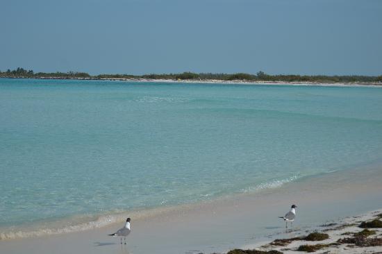 Playa Paraiso : Paraiso 5