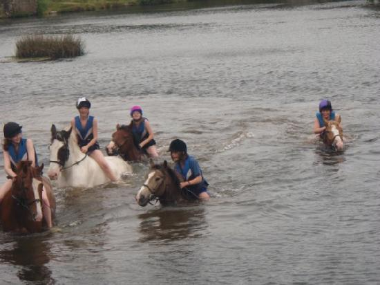 Cornish Riding Holidays : Swimming with the ponies