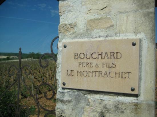 Aux Quatre Saisons Wine Tours : Vineyard that we visited for tasting