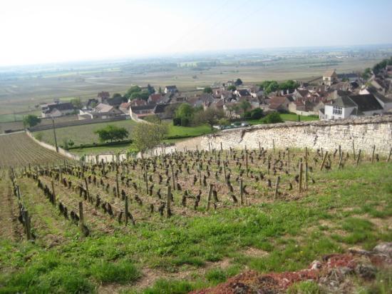 Aux Quatre Saisons Wine Tours : View of vineyards near Beaune.