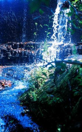 Dismals Canyon: Main falls