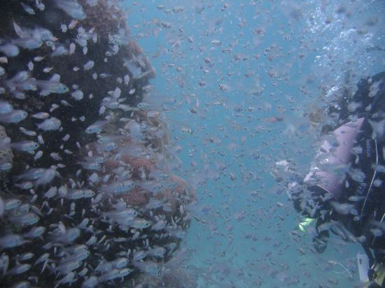 Emperor Divers Nuweiba - Day Tours: glass fish on house reef