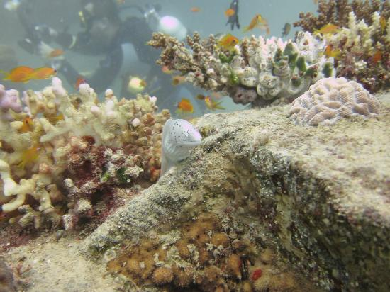Emperor Divers Nuweiba - Day Tours: Moray on the pipes site
