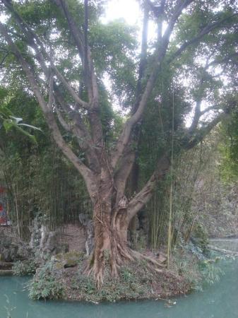 Du Fu Cottage: tree