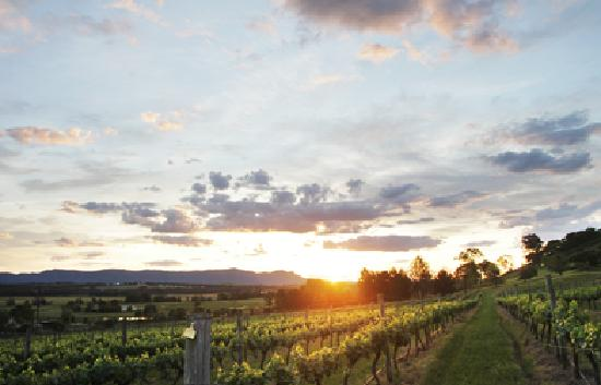 Sovereign Hill Country Lodge: Sunset over the Vineyard