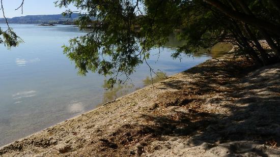 Lake Rotorua - shoreline
