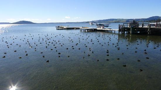 Docks at Lake Rotorua