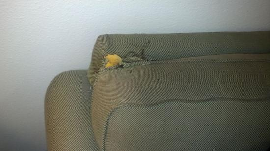 Extended Stay America - Indianapolis - Northwest - I-465: Hole in couch