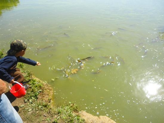 Leesburg Animal Park: lots of fish to feed