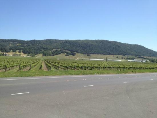 Sonoma Valley Bike Tours & Rentals: on the road