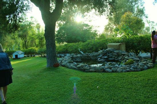 Lazy H Ranch : pond