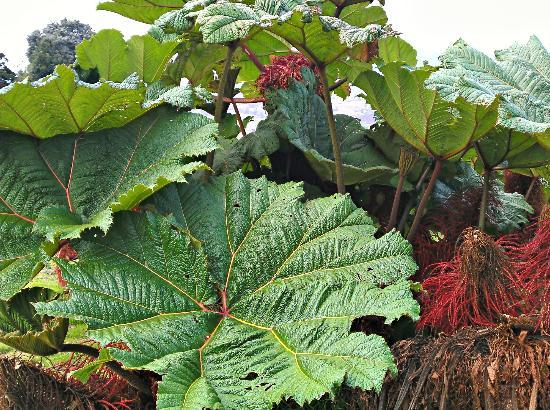 Volcan Turrialba Lodge: big plants due to the high altitude
