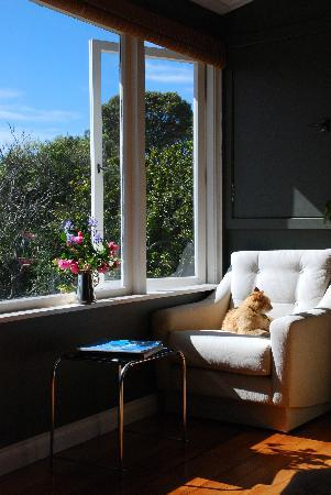 Cobden Garden Homestay: The cat also enjoys the sunroom