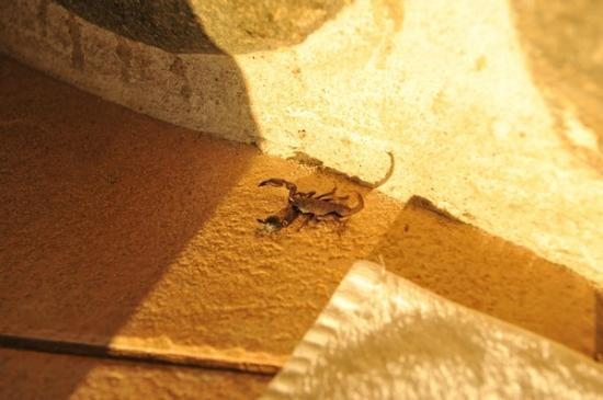Leopard Mountain Safari Lodge: Scorpion in the shower!!!
