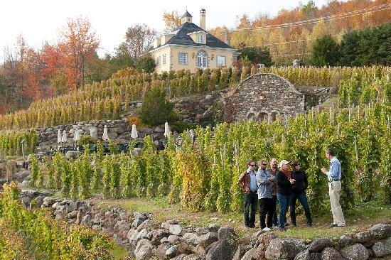Kava Tours: Interpretative visit on viticulture.