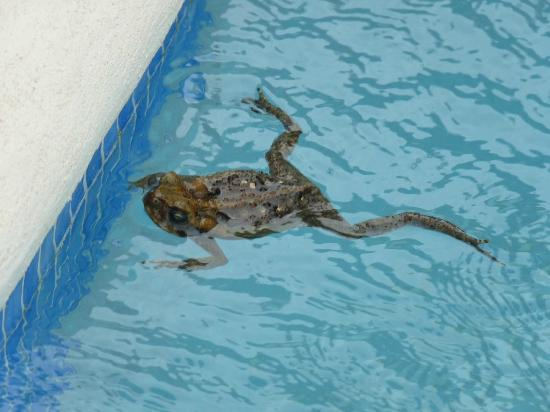 Buccament Bay Resort: Our Plunge Pool Visitor