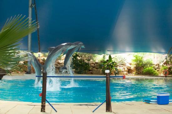 Holiday Village Algarve Balaia: Dolphins at Zoomarine