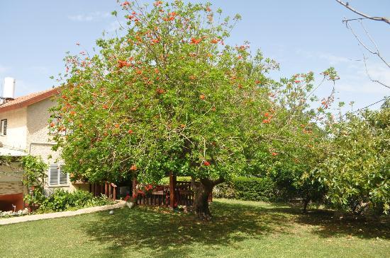 Arbel Guest House Shavit Family: Garden
