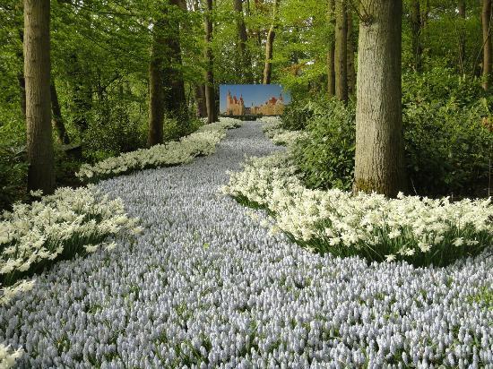 Holland Tour: Floriade Flower Festival, Venlo, The Netherlands