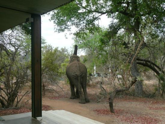 Honeyguide Khoka Moya & Mantobeni Camps: Uitzicht tijdens lunch
