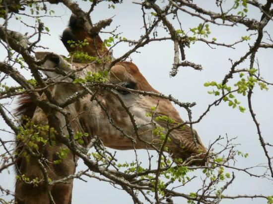 Honeyguide Tented Safari Camps: Vanaf het terras voor de tent