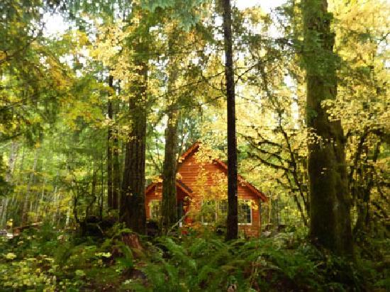 Copper Creek Inn: Muir Cabin in the Fall